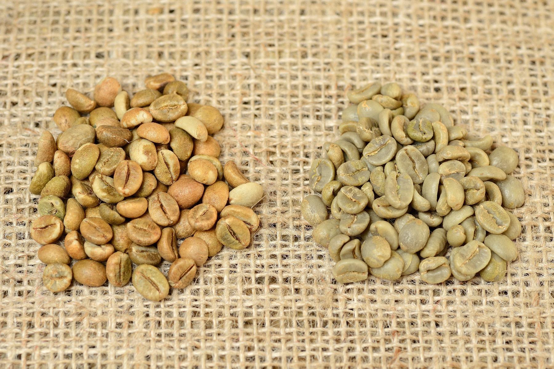 Arabica e Robusta, ecco le differenze che ogni coffee lover dovrebbe conoscere