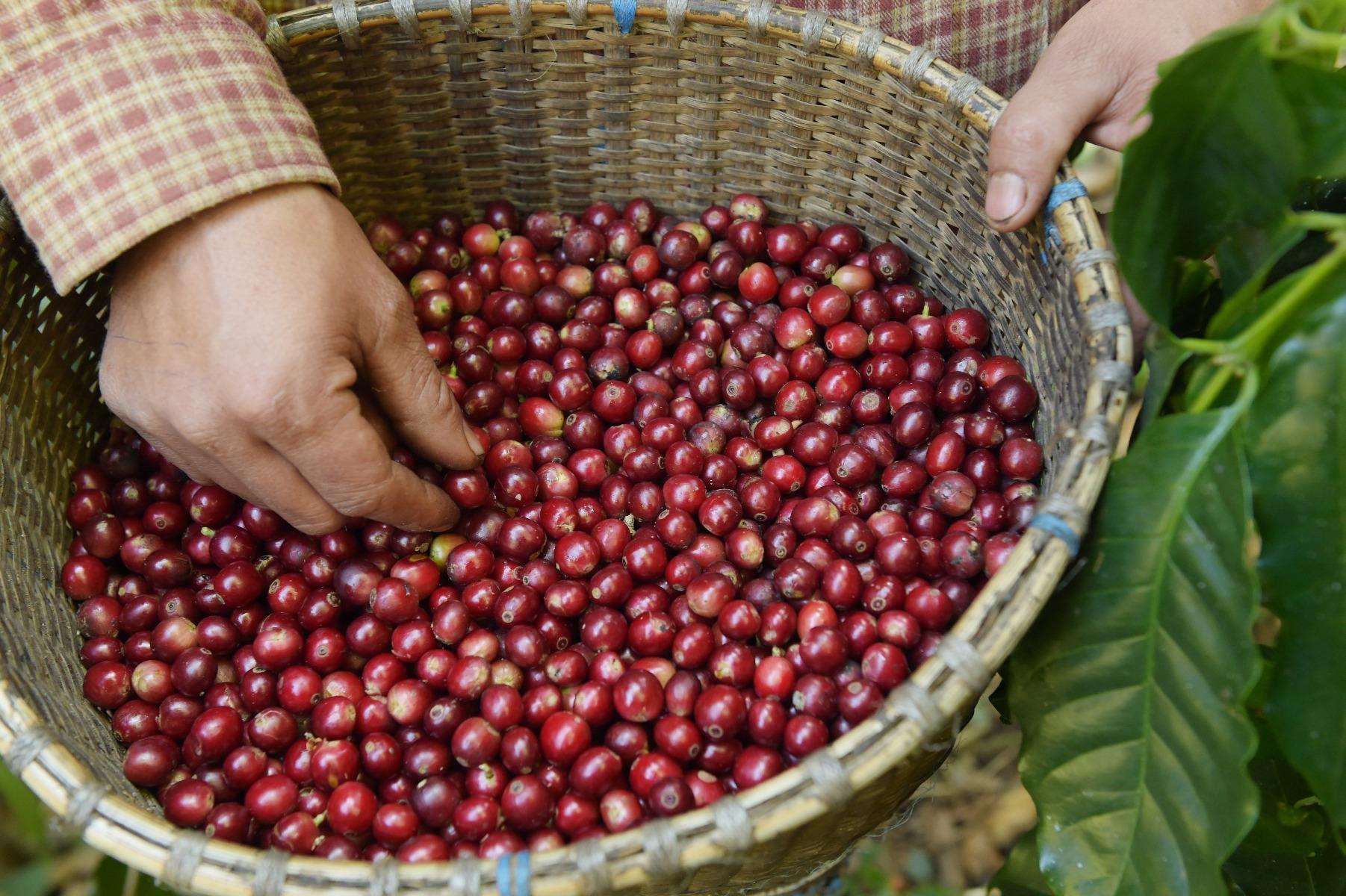 Naturale, lavato e honey:  come i metodi di lavorazione influenzano i caffè che bevi